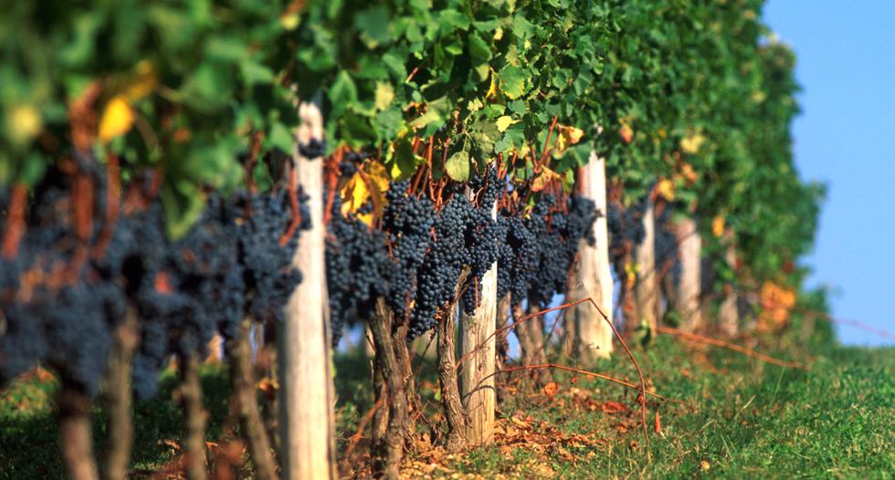 Primeur vente Pécharmant Begerac Tiregand vente en ligne vins