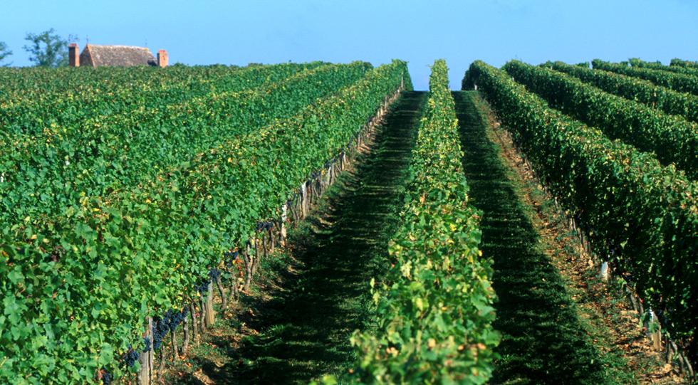 Vignoble Château de Tiregand Bergerac Pécharmant vente de vin